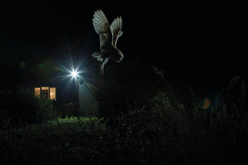 照片:杰米·霍尔/ 2017年年度最佳鸟摄影师奖