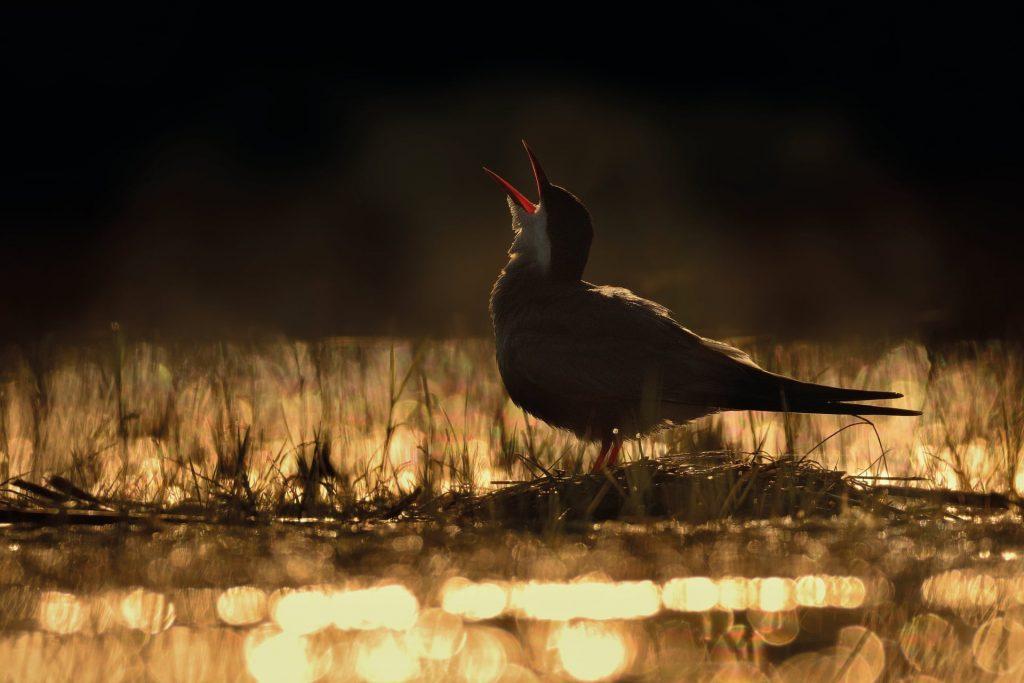 照片:Ondrej Pelanek / 2017年度最佳鸟摄影师奖